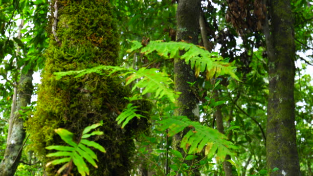 forest in madeira island - madeira stock videos and b-roll footage
