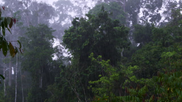 forest in rain, malaysia. - malaysia stock videos & royalty-free footage