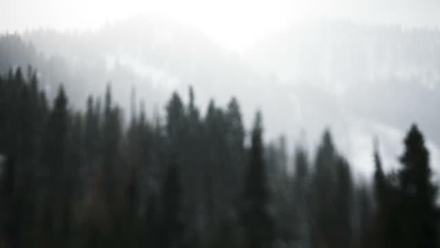 vídeos de stock, filmes e b-roll de wa forest in snow, little cottonwood canyon, utah, usa - cottonwood canyon