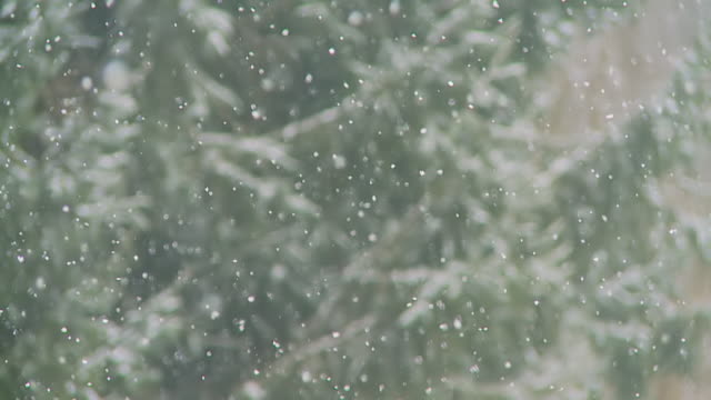HD SLOW MOTION: Forest In Snowfall
