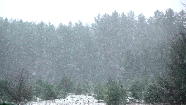 hd slow motion: forest in snowfall - spruce stock videos & royalty-free footage