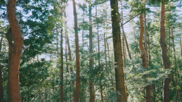 美しい明るい太陽光線がある春の森 - 荒野点の映像素材/bロール