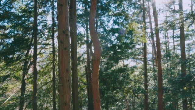 vídeos de stock, filmes e b-roll de floresta na mola com as raias brilhantes bonitas do sol - forester