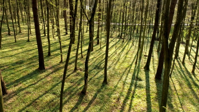 aerial forest in springtime - month stock videos & royalty-free footage