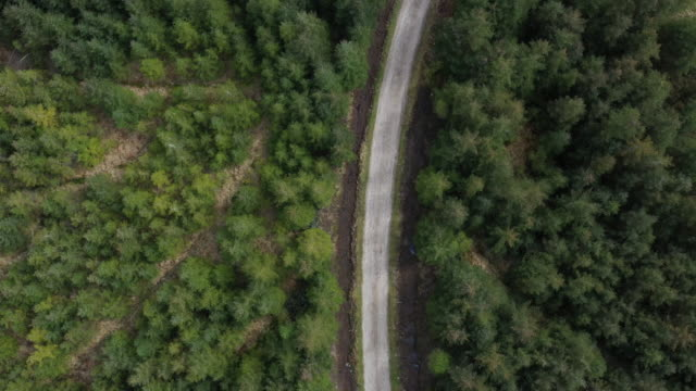 forest in summer with a countryside road - pine stock videos & royalty-free footage