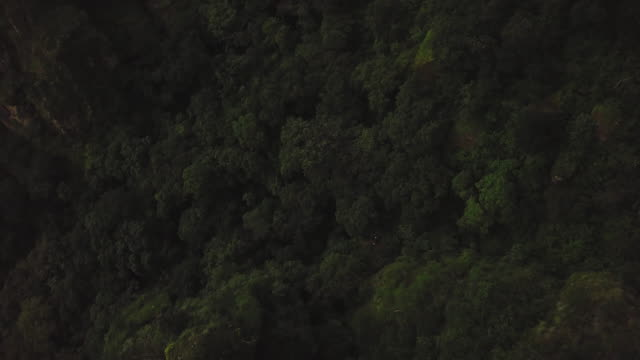 forest in tepoztlán - tepoztlan mountains stock videos and b-roll footage