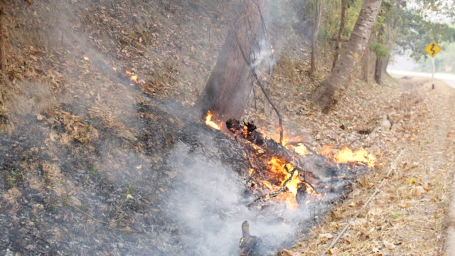 forest in the fire near a road - arid stock videos & royalty-free footage