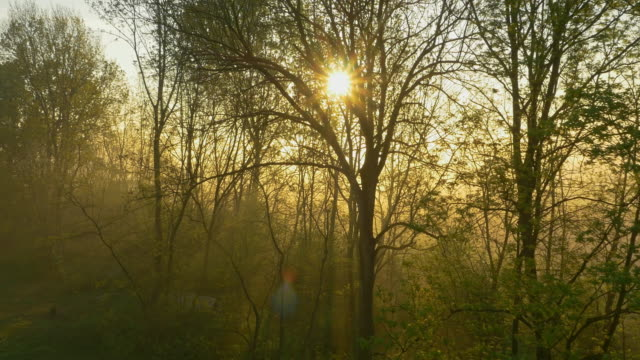 AERIAL Forest in the fog at sunrise