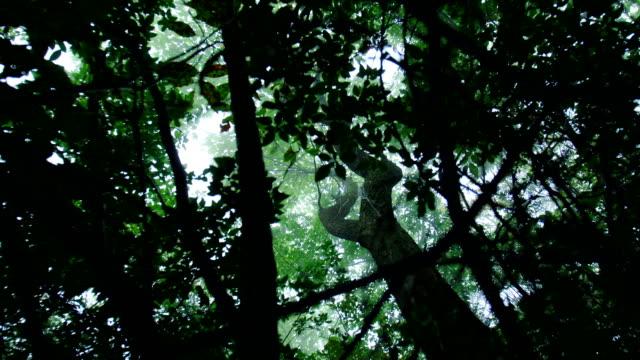 forest in the fog - area selvatica video stock e b–roll