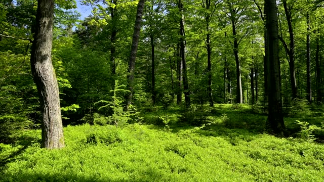 forest in the morning in spring, spessart, bavaria, germany - springtime stock videos & royalty-free footage