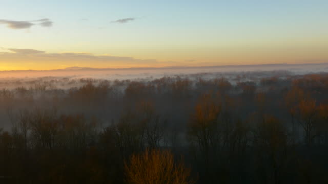 aerial forest in the morning mist - bare tree stock videos & royalty-free footage