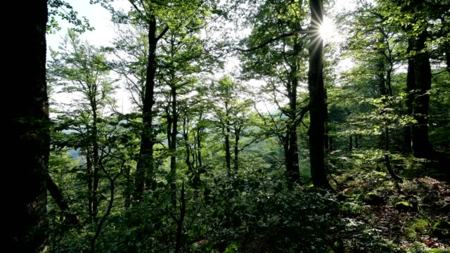 forest in the morning with sun, la bresse, vosges, france - lorraine stock videos & royalty-free footage