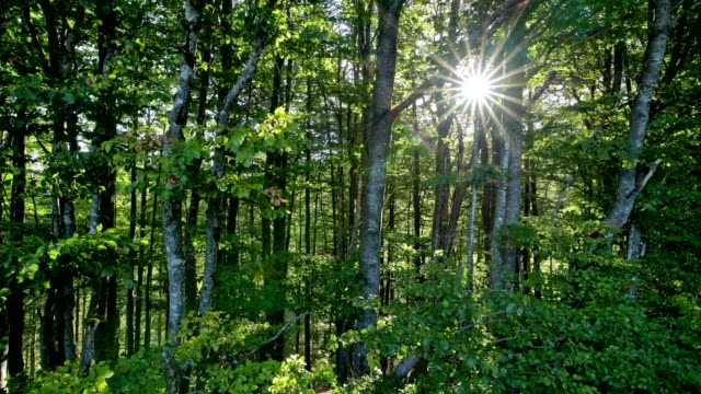 forest in the morning with sun, metzeral, vosges, haut rhin, france - lush video stock e b–roll