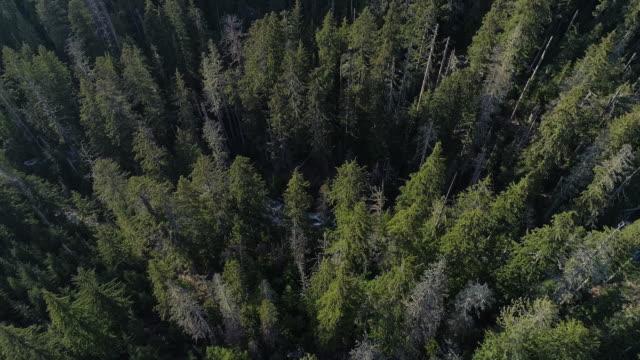 vidéos et rushes de forêt dans les montagnes dans l'état de washington. images aériennes de drone avec le mouvement ascendant et incliné de la caméra. - nord ouest américain