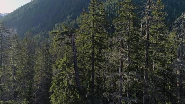 vidéos et rushes de forêt dans les montagnes dans l'état de washington. images aériennes de drone avec le mouvement ascendant de caméra. - nord ouest américain