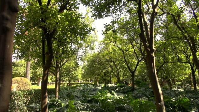 stockvideo's en b-roll-footage met forest in the palace of real alcazar in spain - schaduwe