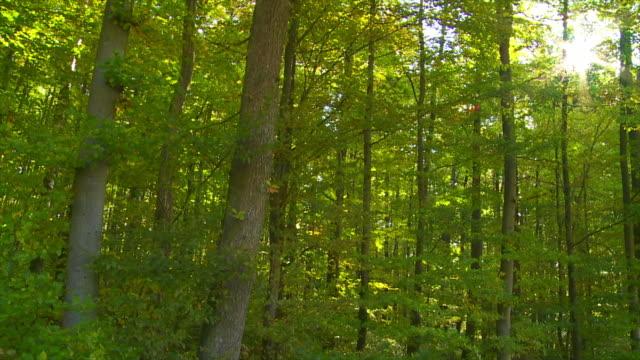 HD Foresta al sole Carrellata