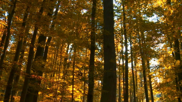 HD Forest in the Sunlight Tracking Shot