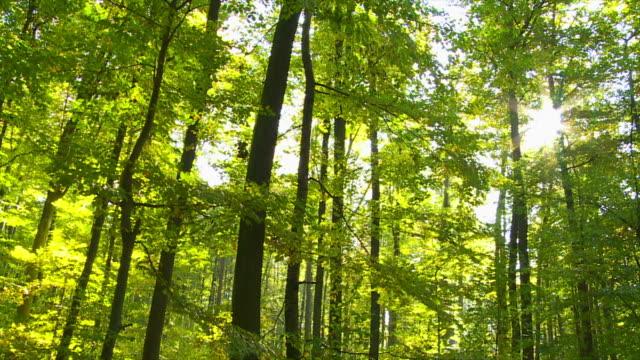 """vídeos de stock, filmes e b-roll de """"pov floresta ao sol tomada de tracking"""" - floresta da bavária"""