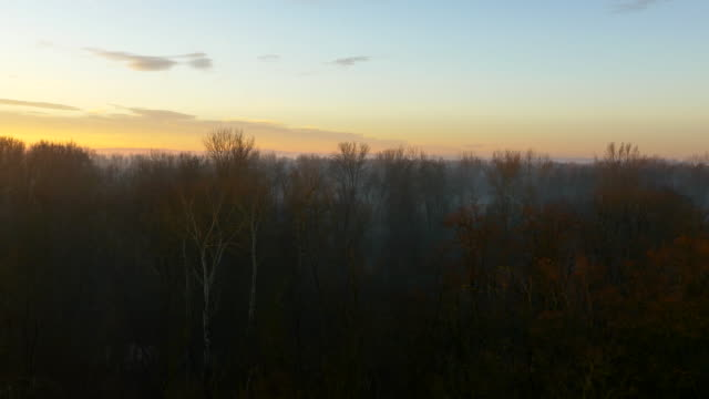 aerial forest in the sunrise - bare tree stock videos & royalty-free footage