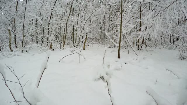 Forest in the winter season.