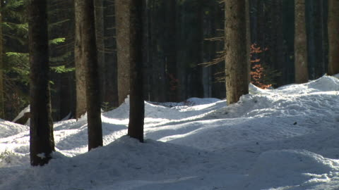 hd: forest in the winter - deciduous tree stock videos & royalty-free footage