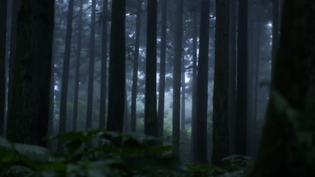 forest in utbamaegi oreum (volcanic cone) in jeju island - woodland stock videos & royalty-free footage