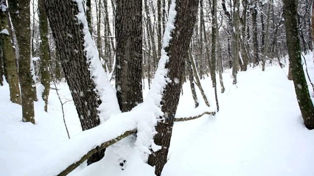 forest in winter; hd dolly - kvist bildbanksvideor och videomaterial från bakom kulisserna
