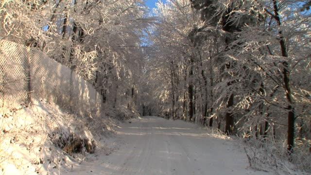 vídeos y material grabado en eventos de stock de hd: bosque en invierno - plano fijo