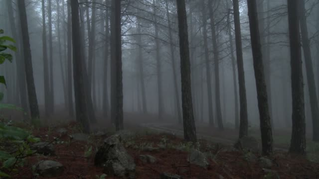 A forest is filled with mist. Available in HD.