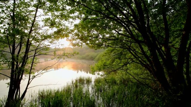 Forest lake at sunrise in spring, Mülbener See