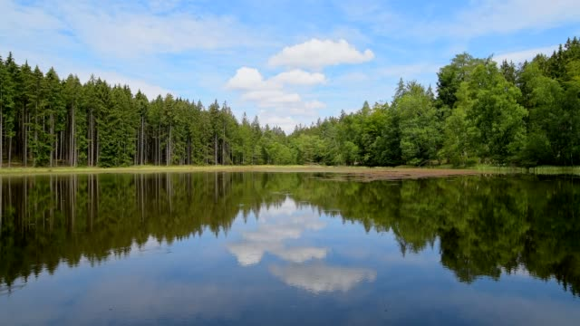 forest lake in summer, odenwald, germany - tree area stock videos & royalty-free footage