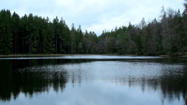 forest lake, odenwald, bavaria, germany - loch stock videos & royalty-free footage