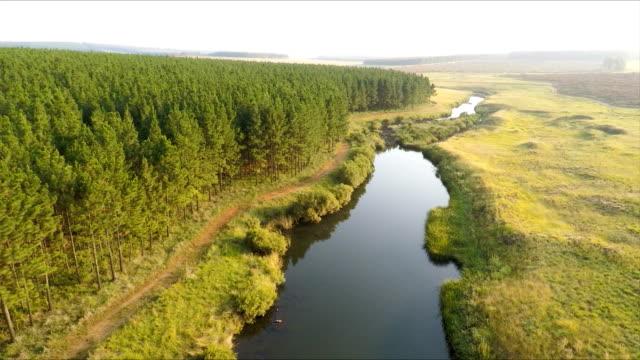 Forest landscape, Mpumalanga, South Africa