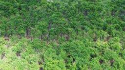 Forest landscape. Navarre. Spain.