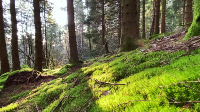 forest landscape of norway - moss stock videos & royalty-free footage