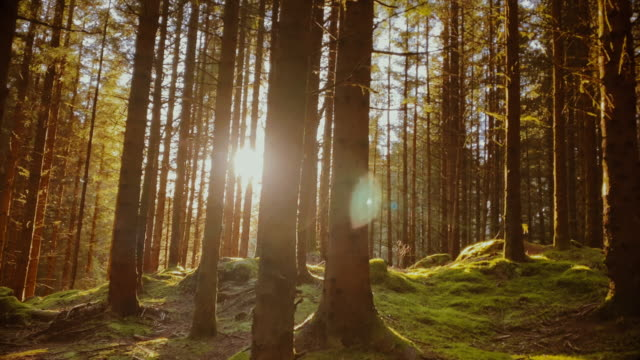 forest landscape of norway - forest stock videos & royalty-free footage