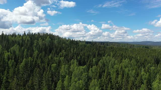 forest landscape - ourbaniserat motiv bildbanksvideor och videomaterial från bakom kulisserna