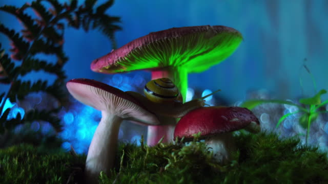forest - macro - mushroom stock videos & royalty-free footage