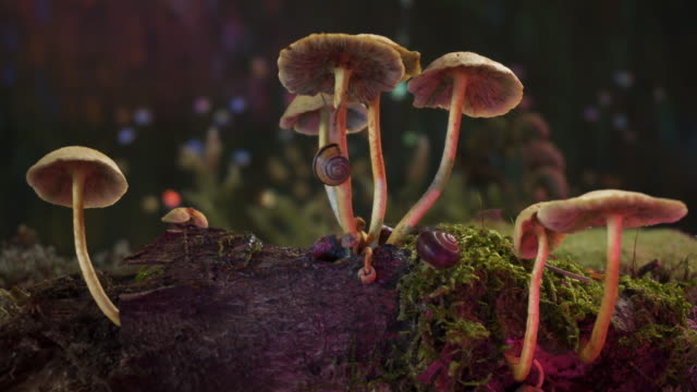 forest -macro - mushroom stock videos & royalty-free footage