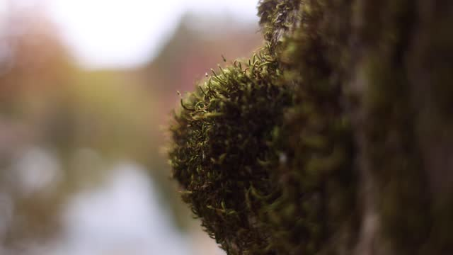 forest moss on tree in shallow depth of field - soft focus stock videos & royalty-free footage