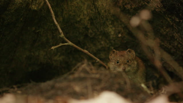 forest mouse under a tree trunk - tree area stock videos & royalty-free footage