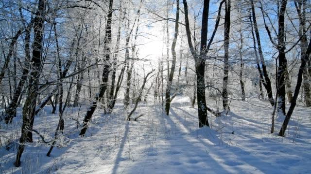 forest near lake barmsee in winter, krün, garmisch-partenkirchen upper bavaria, bavaria, germany, european alps - krün stock videos and b-roll footage