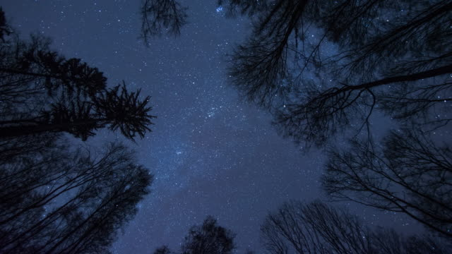 forest night 2 - astronomie stock-videos und b-roll-filmmaterial
