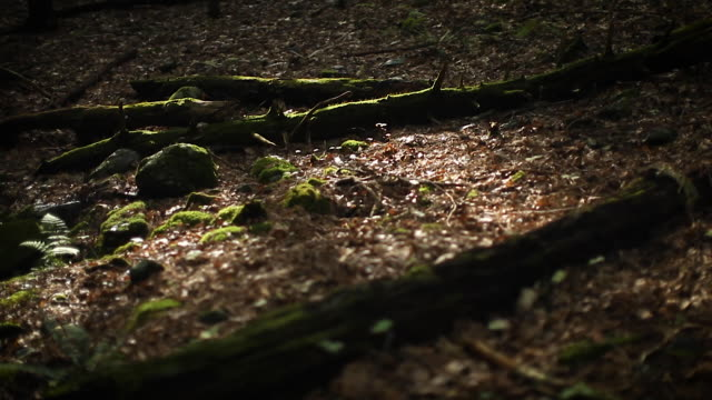 forest - north east usa - forest floor with dry leaves, twigs, and growth - pine tree stock videos & royalty-free footage