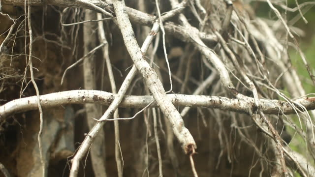 forest - north east usa - pile of roots, twigs, branches and sticks - vermont stock videos & royalty-free footage