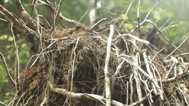 forest - north east usa - pile of roots, twigs, branches and sticks - beaver stock videos & royalty-free footage