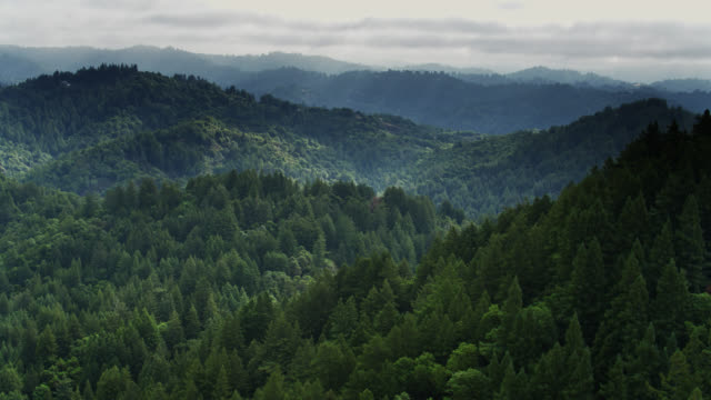 forest north of santa cruz, california - drone shot - hill stock videos & royalty-free footage