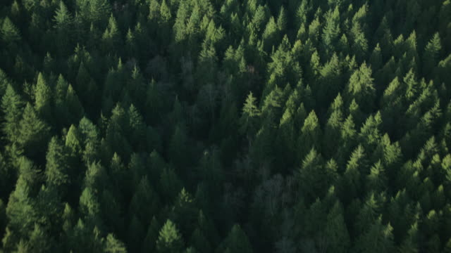 aerial forest of evergreen trees bordering blue and green waters / vancouver, british columbia, canada - coniferous stock videos and b-roll footage