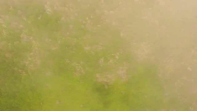 forest of hallasan national park / jeju-do, south korea - horizon stock videos & royalty-free footage